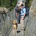 Brett 7 companion dog cross cable bridge